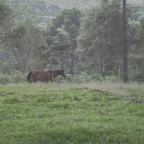 Psicodália 2012 - Cavalo livre