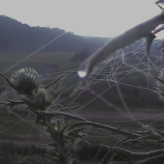 Psicodália 2012 - Momento da natureza